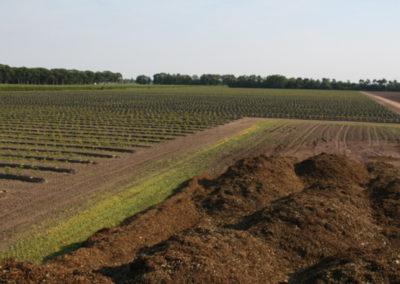 Blauwebessenland - Nieuwe aanplant.3